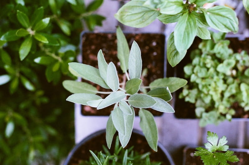 Planet-Saving School Holiday Fun For Creative Kids - Herb Garden